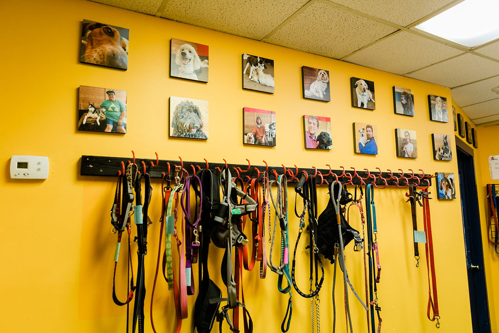 Leashes at Dog Buddies Daycare