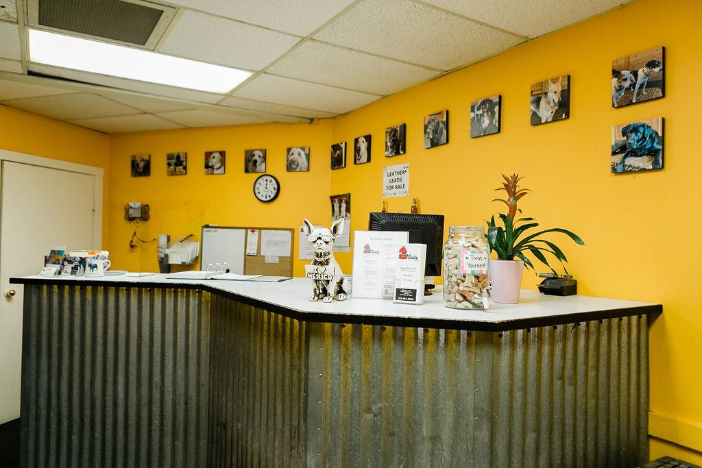 Front Desk at Dog Buddies Daycare