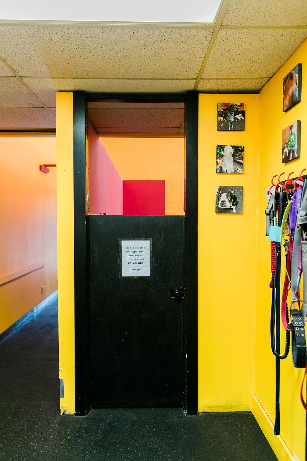 Main Entrance to Playroom at Dog Buddies Daycare