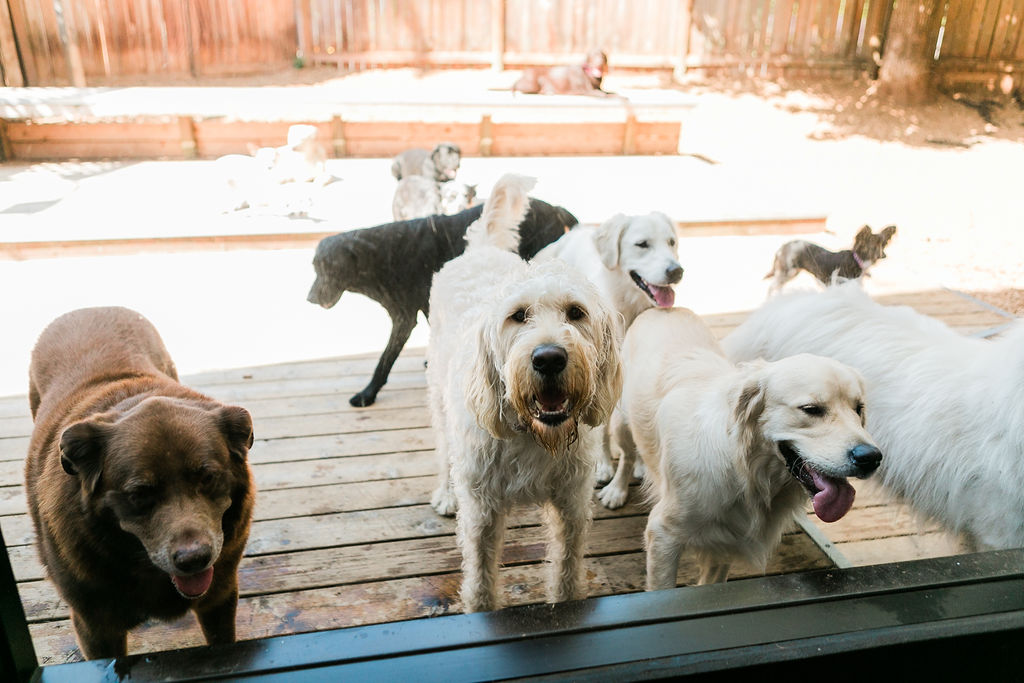 Group of Friendly Dogs at Dog Buddies Daycare